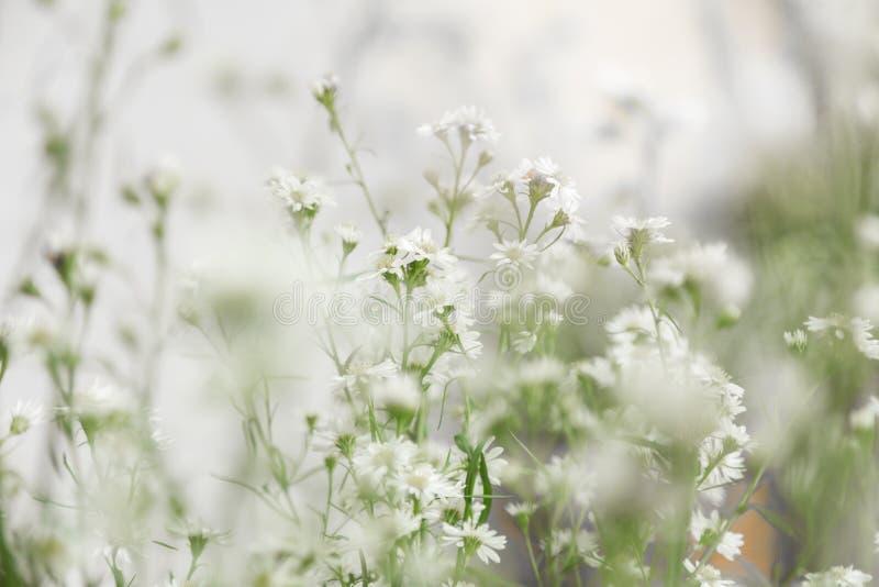 Белые цветки, расплывчатая флористическая предпосылка стоковое фото rf