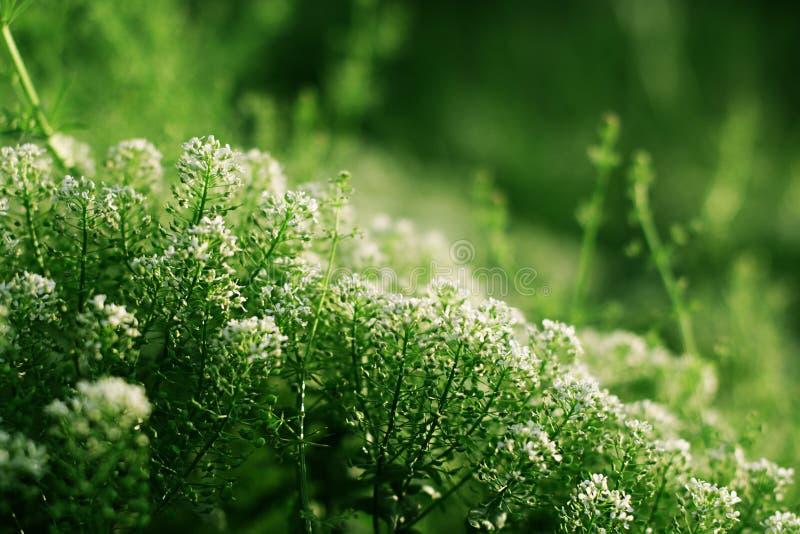 Белые цветки с зеленой предпосылкой стоковые фото