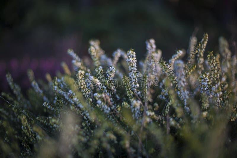 белые цветки с расплывчатой предпосылкой стоковое изображение rf