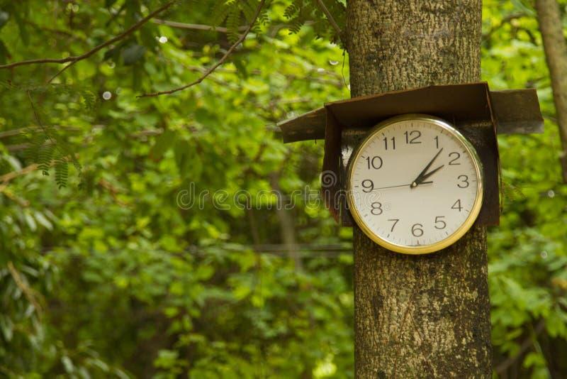 Белые часы висят на дереве стоковые изображения rf