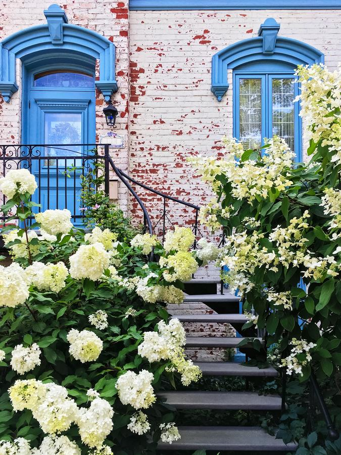 Белые gardenias украшая фасад живописного таунхауса стоковое изображение rf
