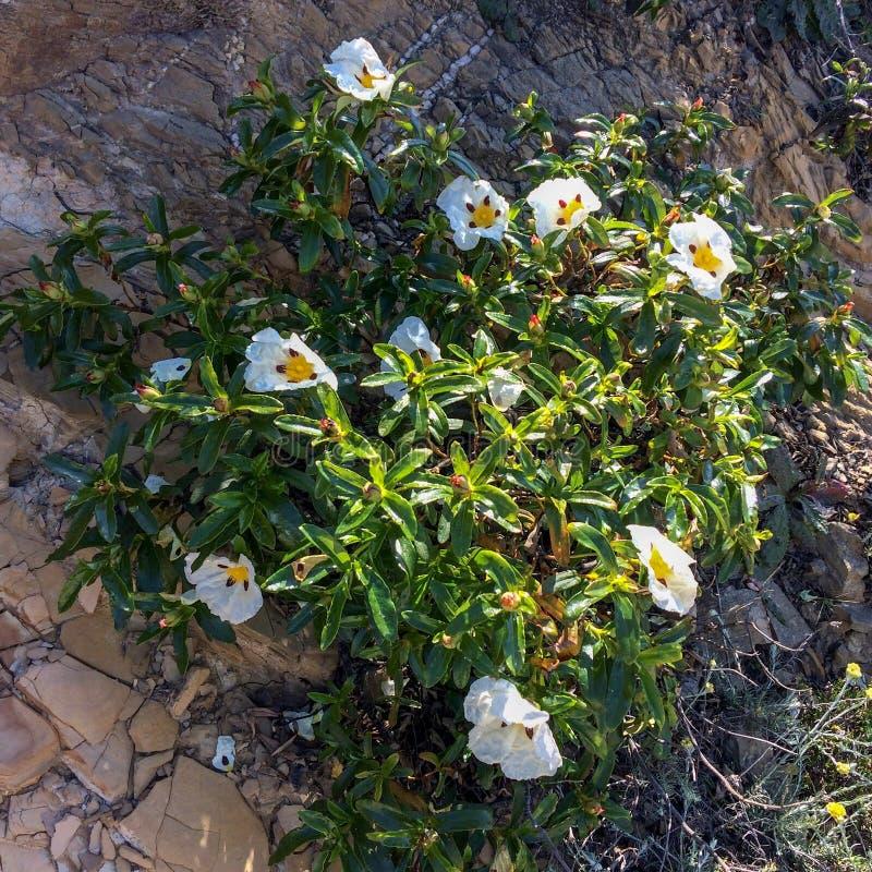 белые wildflowers стоковые изображения rf