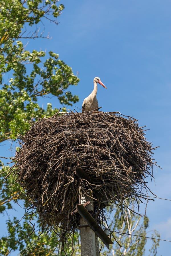 Белый аист в гнезде на поляке стоковая фотография rf
