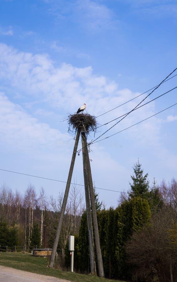 Белый аист стоит в гнезде которое сложено на поляке для проводов стоковая фотография