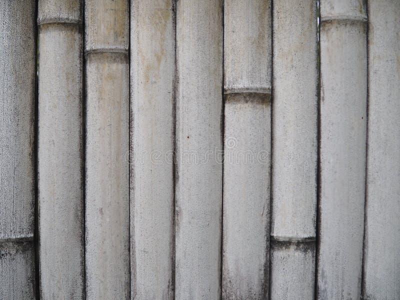 Белый бамбуковый вид спереди стены Бамбуковая предпосылка стоковые фото