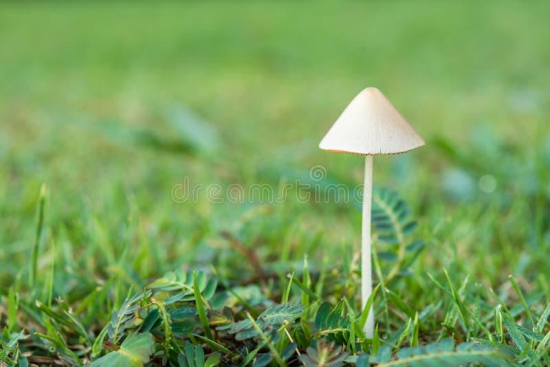 Белый гриб на зеленой траве стоковые фото