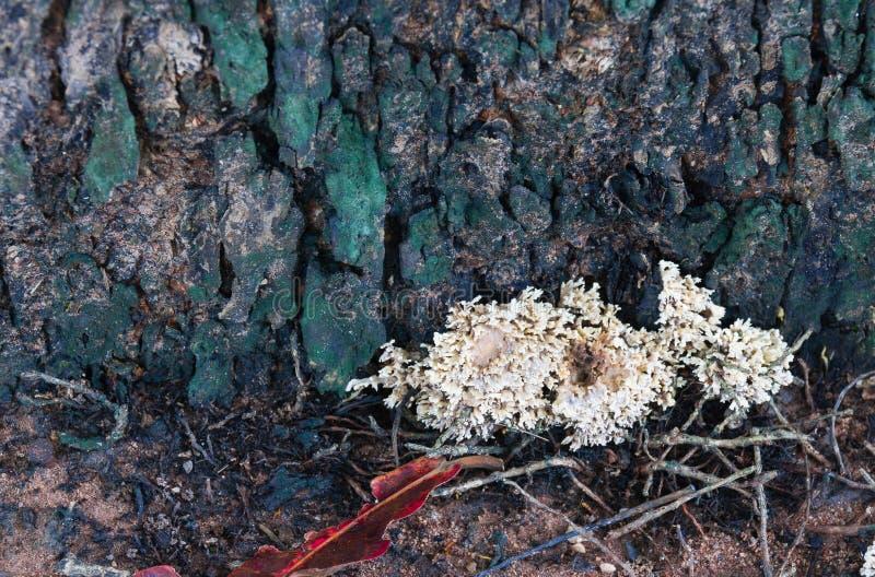 Белый гриб происходит естественно на тимберсе стоковые фото