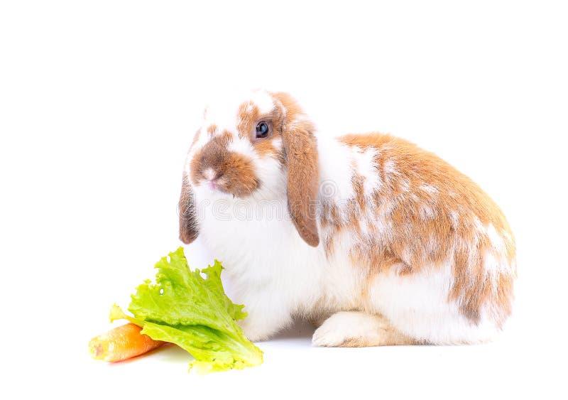Белый и коричневый кролик почти остаться к моркови и зеленому овощу на стоковые изображения rf