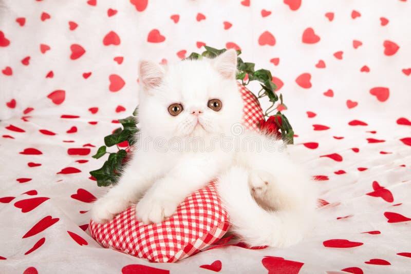 Белый котенок с сердцами влюбленности стоковое фото