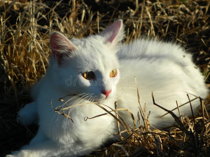 Белый кот на траве стоковая фотография rf