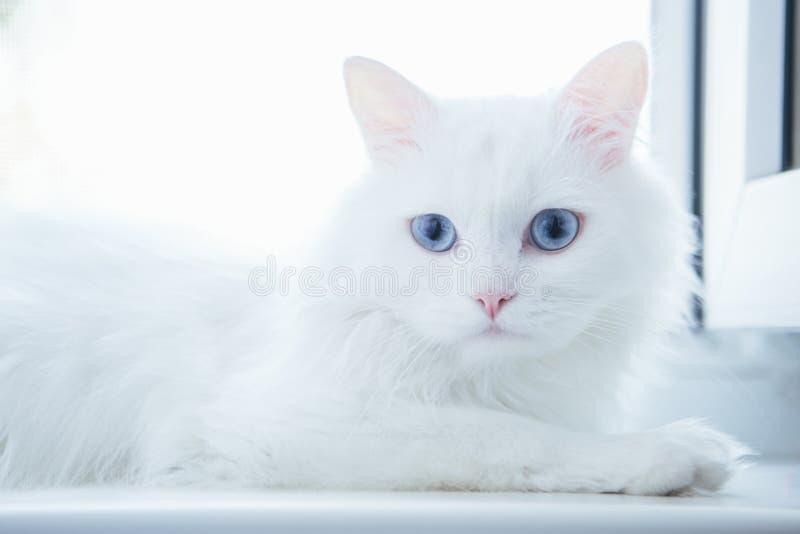 Белый кот на windowsill стоковое фото