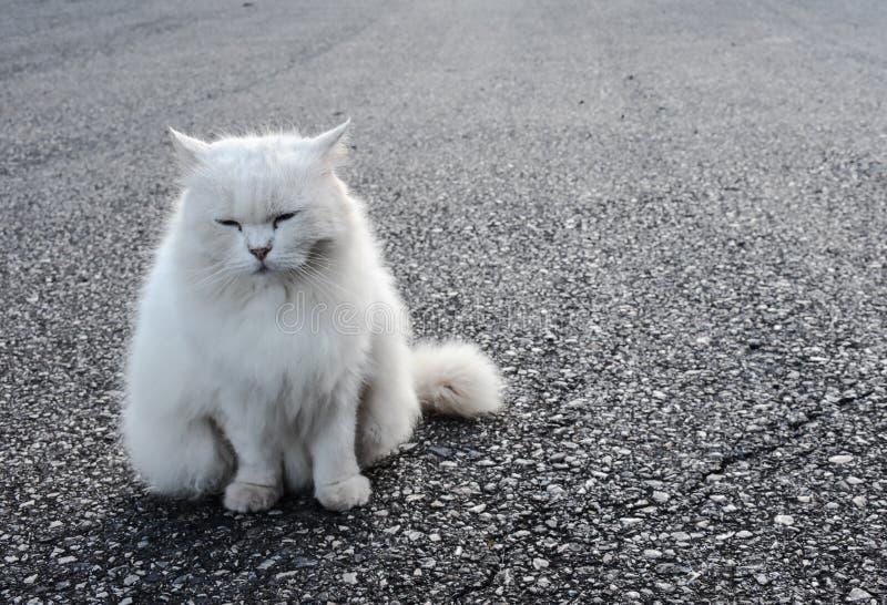 Белый кот сидит выглядеть прям вперед , defocus, фокус пятна стоковая фотография rf