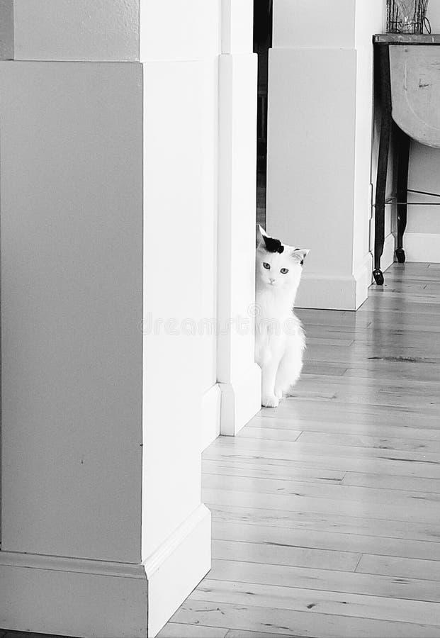 Белый кот, сомнительно выглядящий за углом стоковое фото