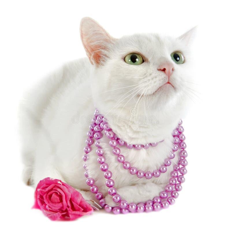 Белый кот стоковое изображение