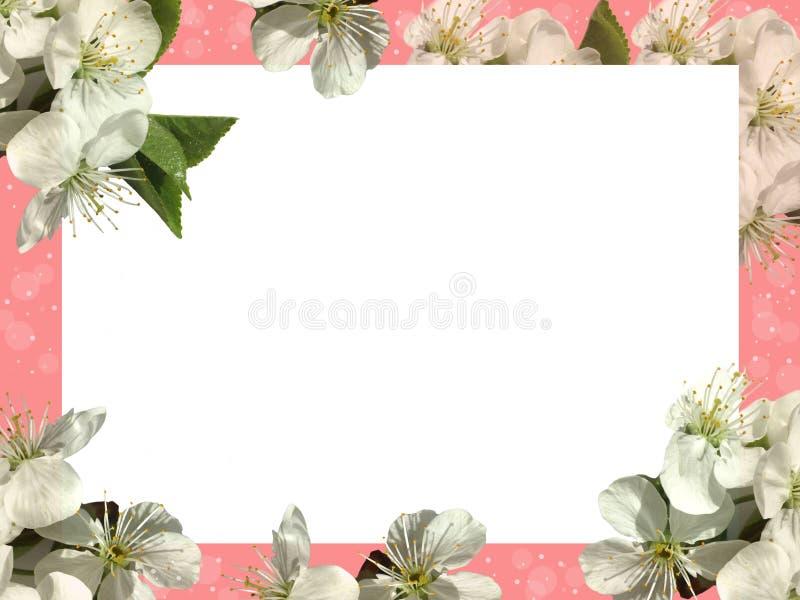 Белый лист на розовой предпосылке и белые цветки стоковое изображение rf