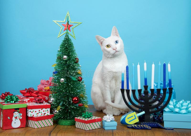 Белый любопытный кот с глазами heterochromia сидя между украшениями рождества и Хануки стоковое изображение