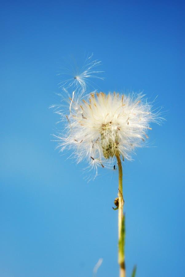 Белый маленький засоритель утюга в предпосылке голубого неба стоковые изображения rf