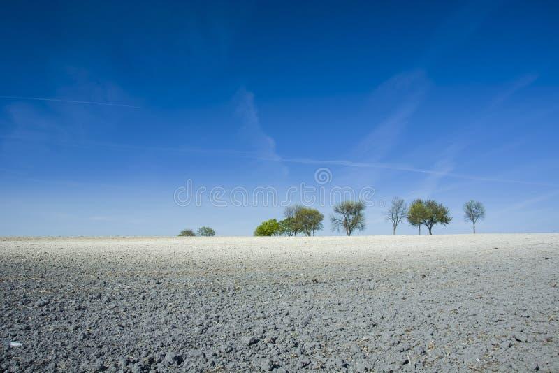 Белый мел на поле и на дереве Польша, Woyslawice стоковые изображения rf