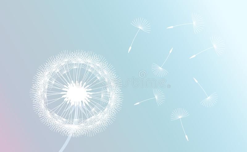 Белый одуванчик дунутый ветром на пастельной предпосылке градиента иллюстрация вектора