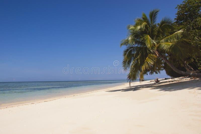 Белый песчаный пляж с palmtree стоковое фото rf