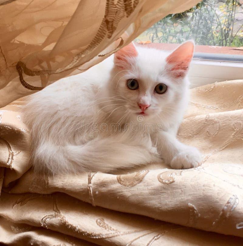 Белый сладкий кот стоковые изображения