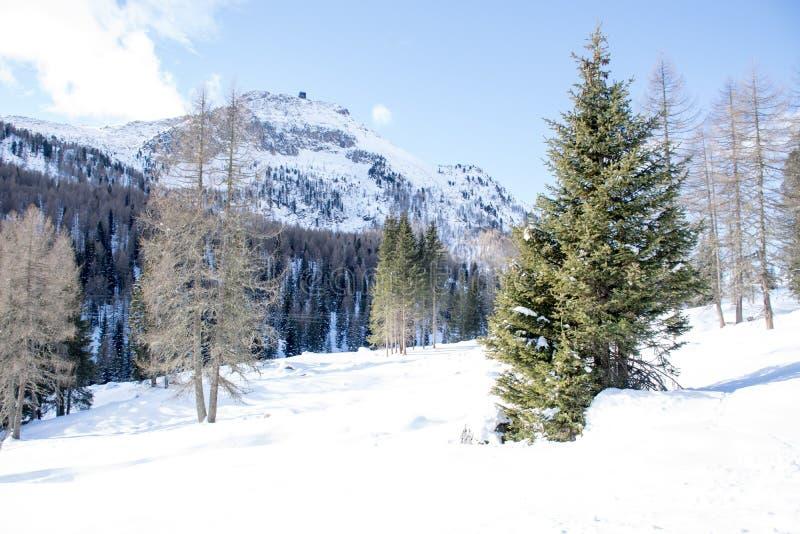 Белый снежок и голубое небо стоковое изображение rf