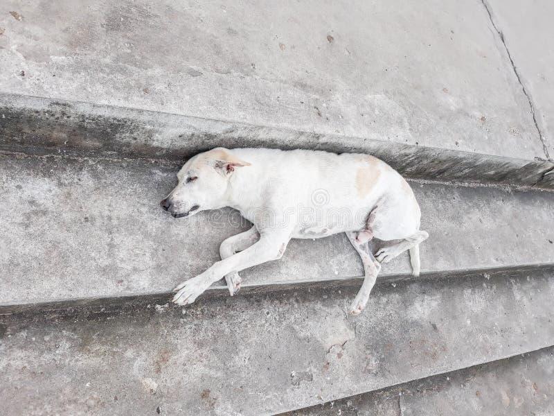 Белый сон собаки на лестнице стоковое изображение rf
