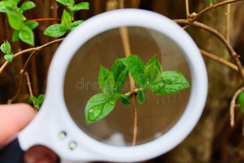 Белый увеличитель увеличивает зеленые листья на ветви в падениях воды стоковое фото rf