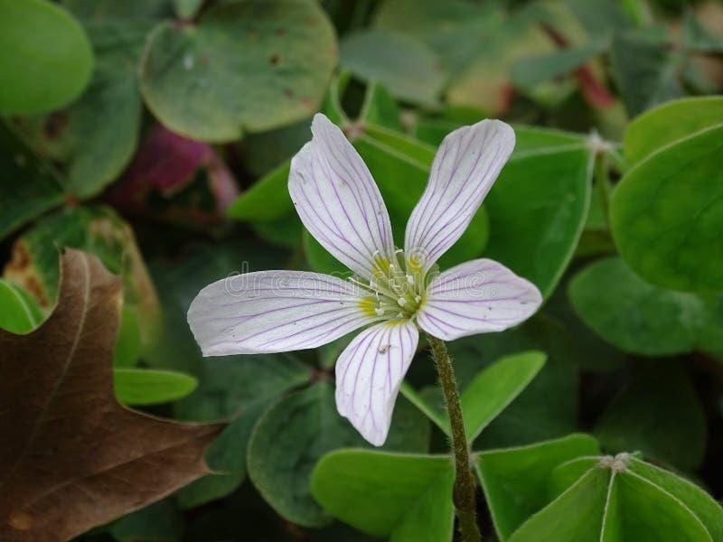 Белый цветок в парке стоковое фото rf
