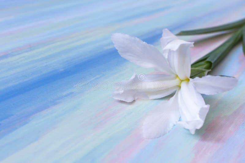 Белый цветок как символ очищенности и влюбленности стоковое изображение rf
