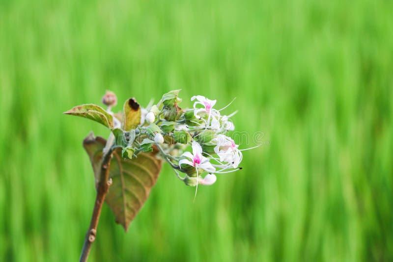 Белый цветок на зеленом открытом саде лета предпосылки стоковые изображения rf