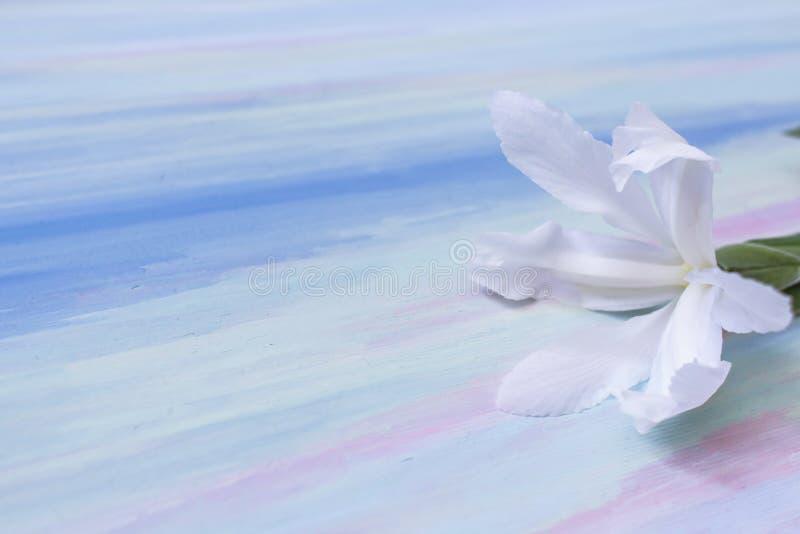 Белый цветок на нежной предпосылке стоковое фото