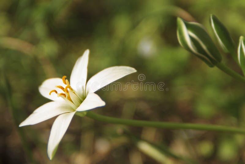 Белый цветок на солнце стоковые фотографии rf