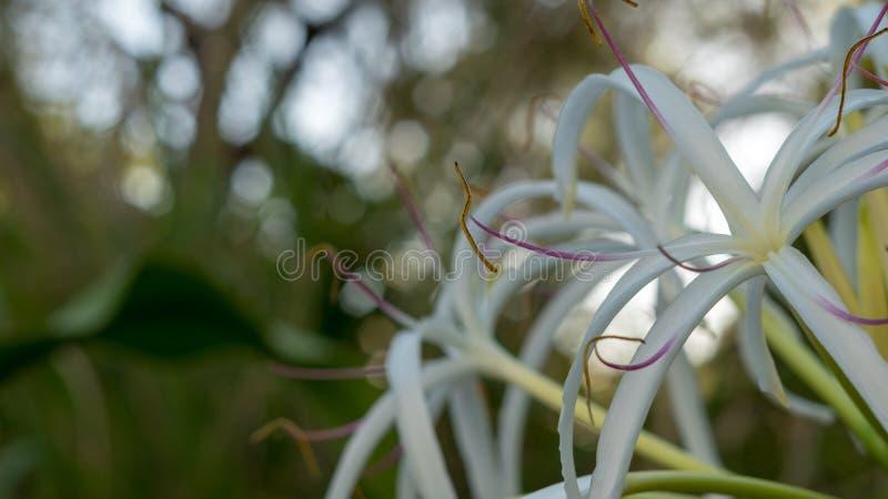 Белый цветок сидит на праве изображения стоковые изображения