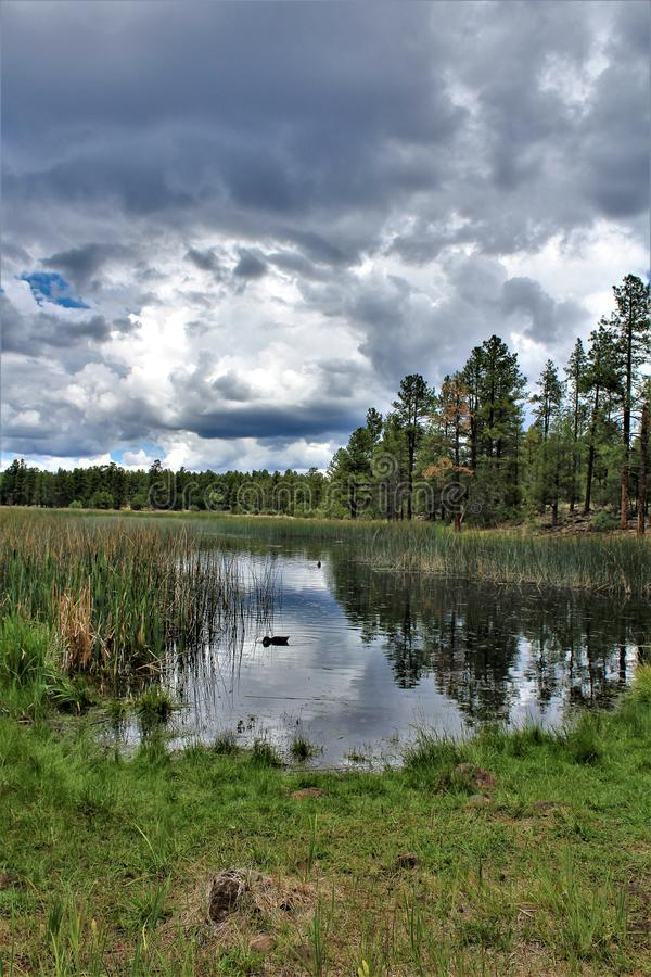 Белый центр природы горы, берег озера Pinetop, Аризона, Соединенные Штаты стоковая фотография rf