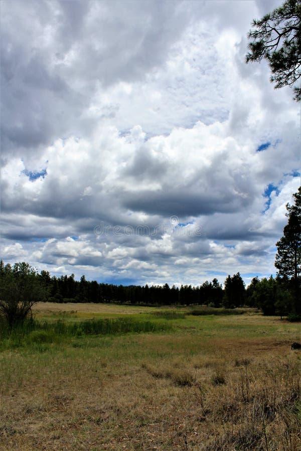 Белый центр природы горы, берег озера Pinetop, Аризона, Соединенные Штаты стоковые изображения