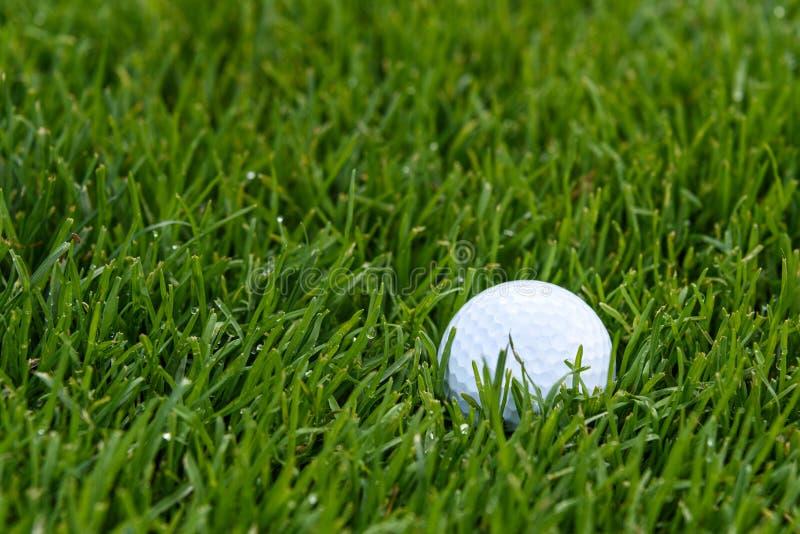 Белый шар для игры в гольф глубоко в высокорослой траве грубого, росе раннего утра на траве стоковая фотография rf