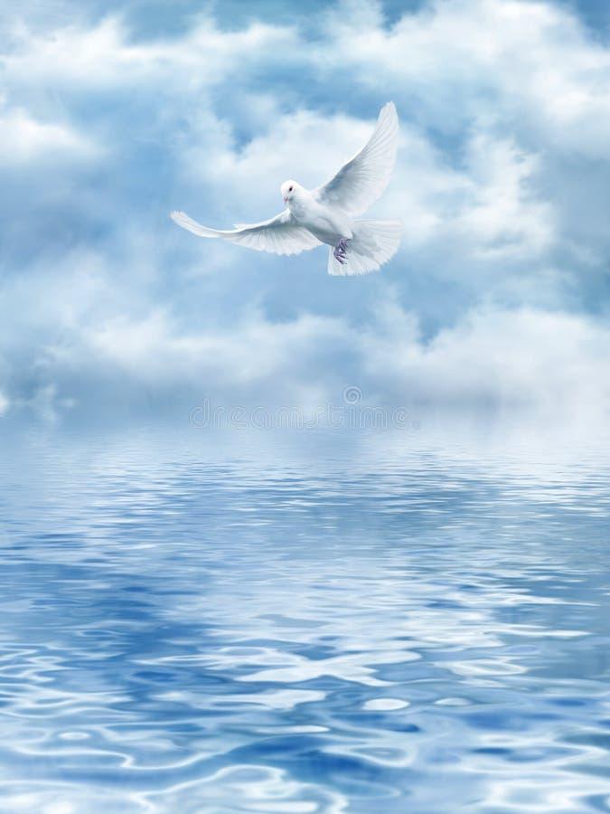 Белый Dove воды иллюстрация вектора