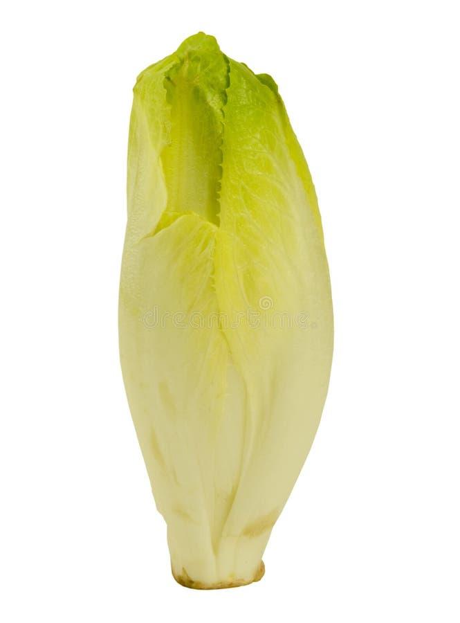 бельгийский эндивий свежий стоковая фотография
