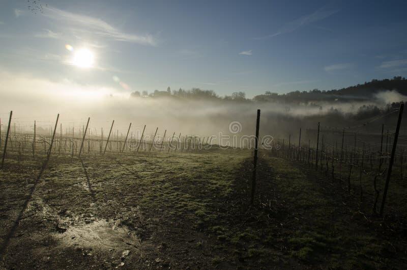 Download Бергамо, виноградник стоковое фото. изображение насчитывающей виноградник - 40575998
