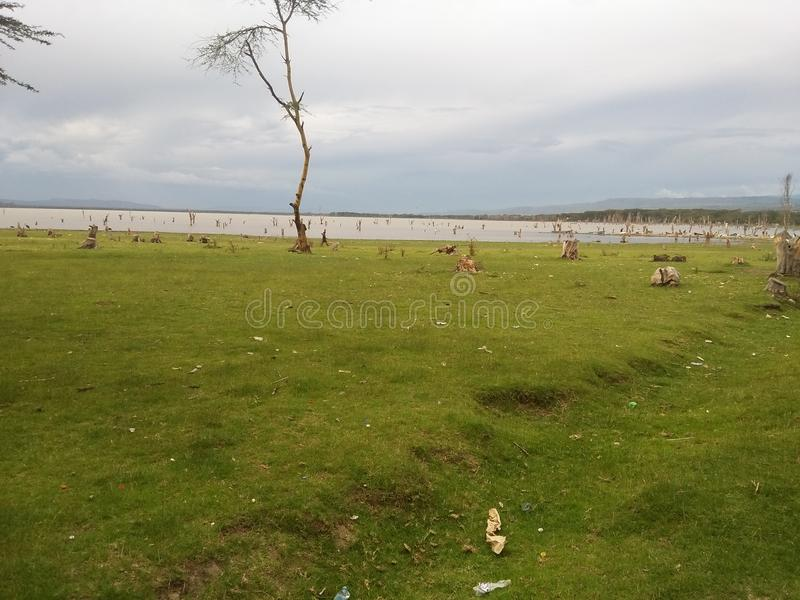 Берега озера Naivasha стоковое фото rf