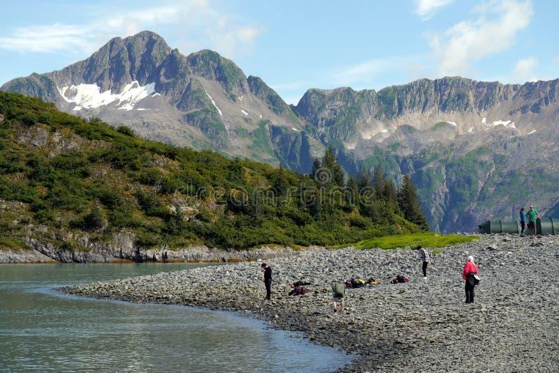 Берега Aialik преследуют, Seward, Аляска стоковые изображения rf