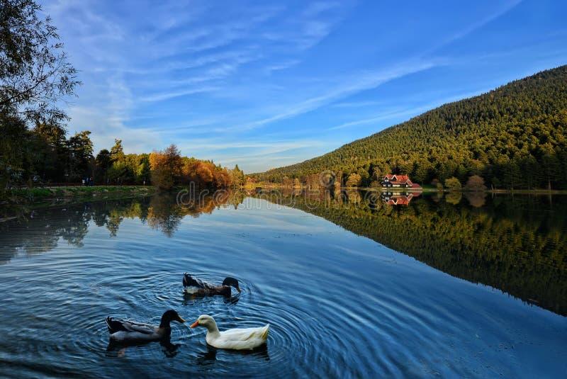 берега pehoe парка paine озера дома америки Чили del гостиницы torres национального южные стоковая фотография