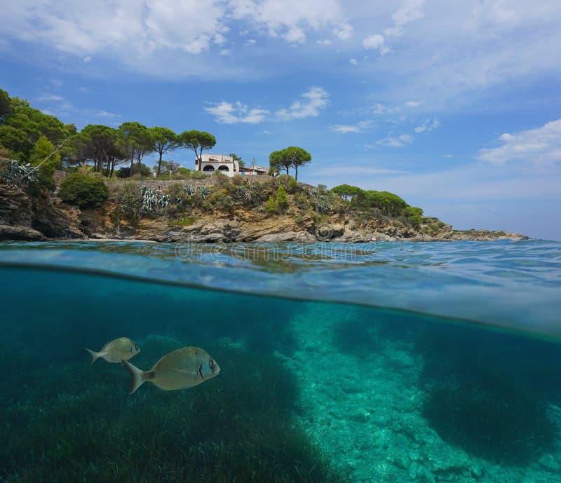 Береговая линия и рыбы Средиземного моря с seagrass стоковое фото rf