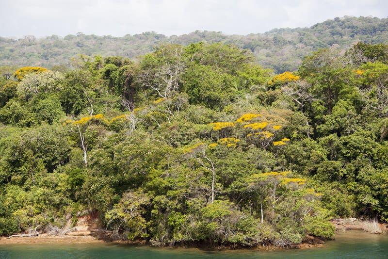 Берег джунглей ` s Панамы стоковые изображения rf
