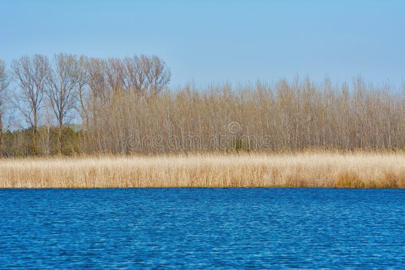 Берег озера в осени стоковое изображение rf