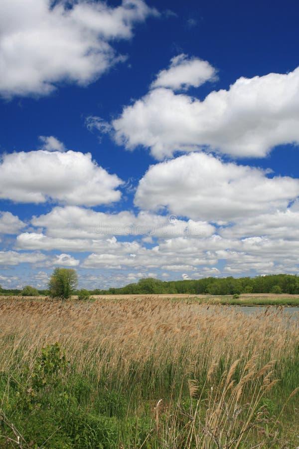 берег реки ландшафта сельское стоковые изображения