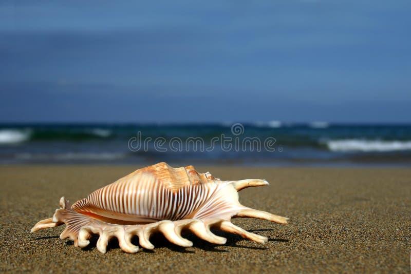 берег seashell стоковые фотографии rf