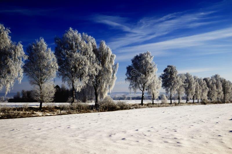 береза покрыла валы снежка стоковое фото
