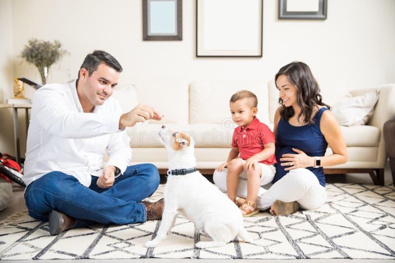 Беременная женщина и сын смотря щенка человека подавая дома стоковые изображения